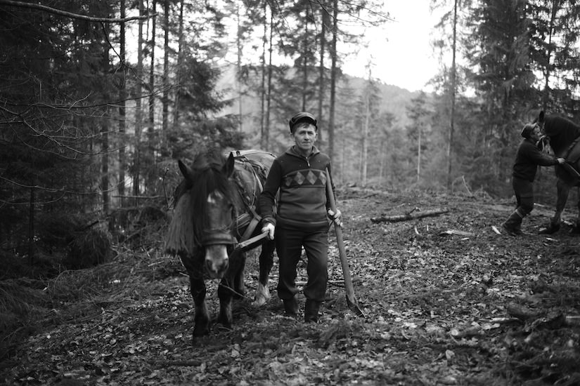 A woodsman working the land with his horse
