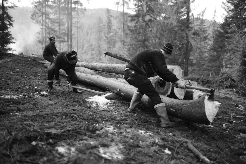 Woodsmen stacking lumber by hand