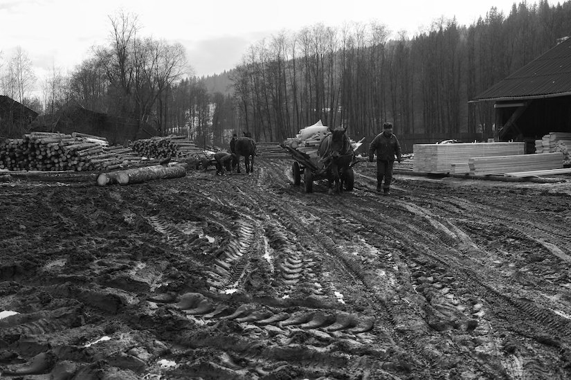 A lumber yard and sawmill in Moldovita, Romania