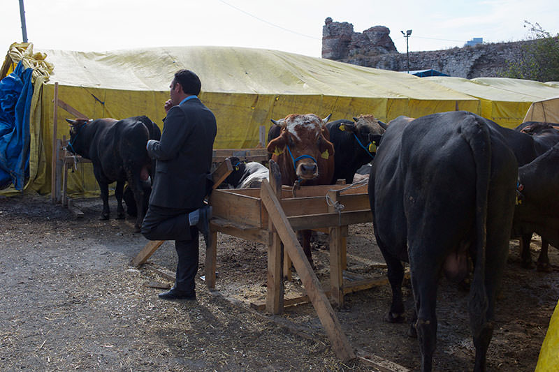 A farmer waiting to sell his cows