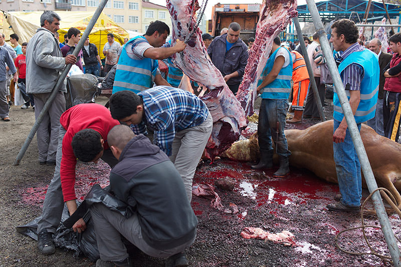 sacrificed cows being butchered to share meat among the famailies and needy