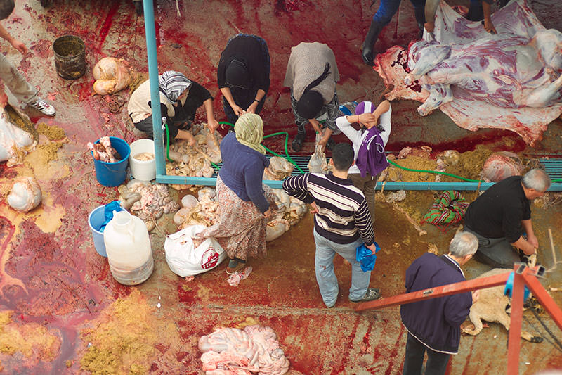 a family helping wash and divide the remainings of a sacrificed cow